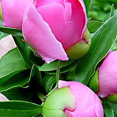 """фото """"цветы в моем саду"""""""