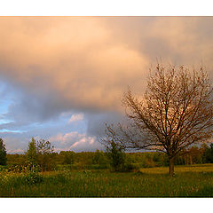 """фото """"a tree and the clouds"""""""