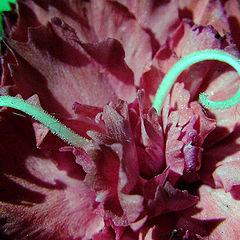 """фото """"Purple Flower"""""""