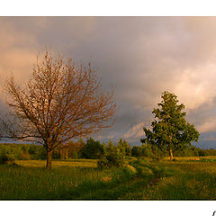 """фото """"Two trees and the clouds"""""""