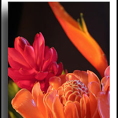 "photo ""Flowers 1"""