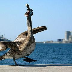 """photo """"Danse du port"""""""