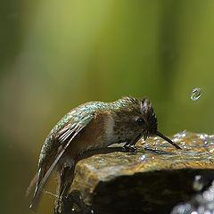 """фото """"Hummer and waterfall"""""""