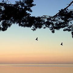 """фото """"пейзаж. утро"""""""