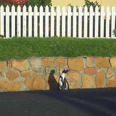 """фото """"do you have penguins in your front garden?"""""""