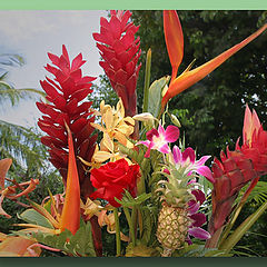 "фото ""Tropical flowers"""