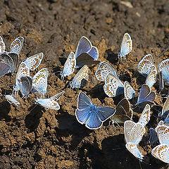 """photo """"Butterflies #3"""""""
