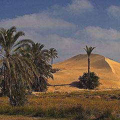 """фото """"Dunes"""""""