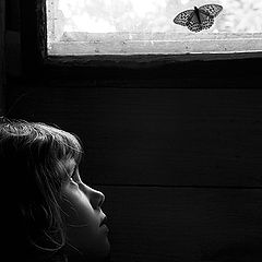 "photo ""About the old house, the butterfly and the small s"""