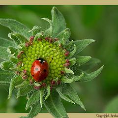 "photo ""Ladybug Landing Pad"""