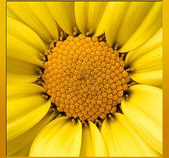 "photo ""The Sun"""