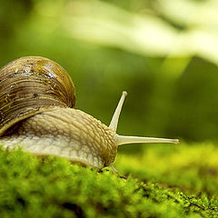 "photo ""Snail on a slope"""