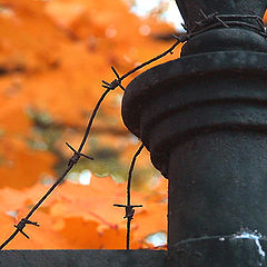 "фото ""Арестованная осень."""