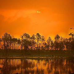 "фото ""Sunrise at Eagle Lakes-Naples, Florida"""