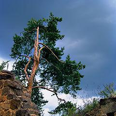 """photo """"Above a precipice"""""""
