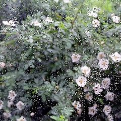 "photo ""Season of rains and rough flowering!"""