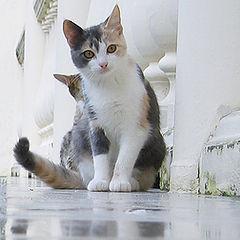 "фото ""Cats"""