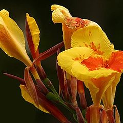 "фото ""Yellow and Red II"""