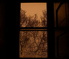 "photo ""Window 2004"""