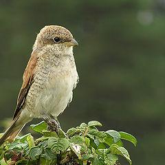 """album """"Birds"""""""