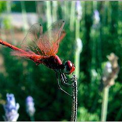 "photo ""DragonFly2"""