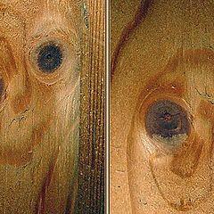 """фото """"twins of wood"""""""