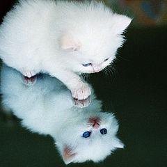"""photo """"kitten"""""""