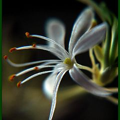 """photo """"to little flower"""""""