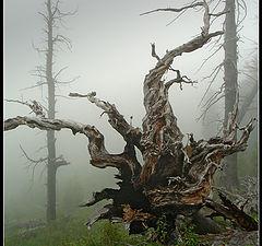 """photo """"Altai"""""""