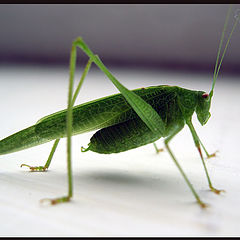 "photo ""Locust"""