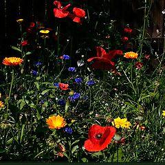 "фото ""Flower glade (2)."""