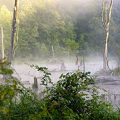 "photo ""Swamp Gas"""