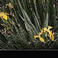 "фото ""Night flowers"""