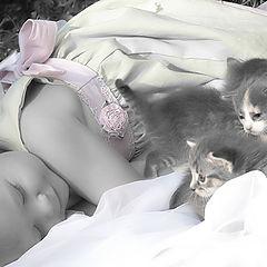 """фото """"Cat Nap"""""""