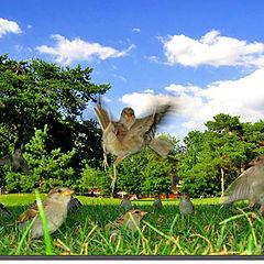 """фото """"Landing Bird"""""""