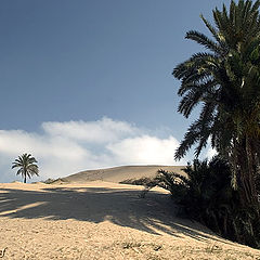 """фото """"Dunes 4"""""""