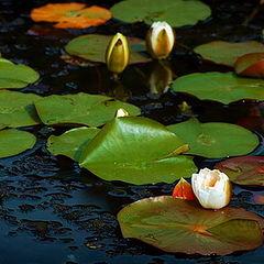 """фото """"pond"""""""