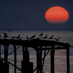 """фото """"Rising sun"""""""