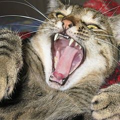 "photo ""Beast-Cat"""