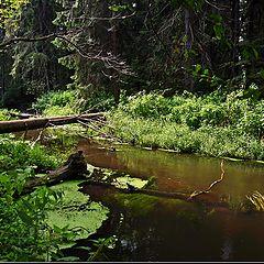 "фото ""Forest bridge."""