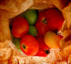 "photo ""Veggies in a Bag"""