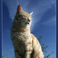 "фото ""Кот, просто кот"""