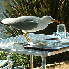 "photo ""Sea-gull Banquet"""