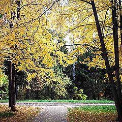 """фото """"Осенний рисунок"""""""