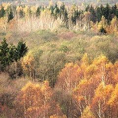 """фото """"Autumn 2"""""""