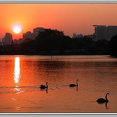 "photo ""Swan`s Lake"""