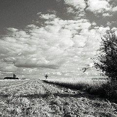 """фото """"Field."""""""