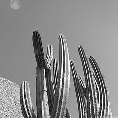 "фото ""catus from xochicalco mex"""