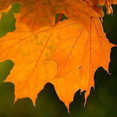 """фото """"Вот и я увидел осень...."""""""