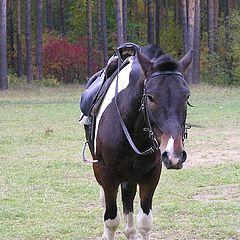 """фото """"лошада"""""""